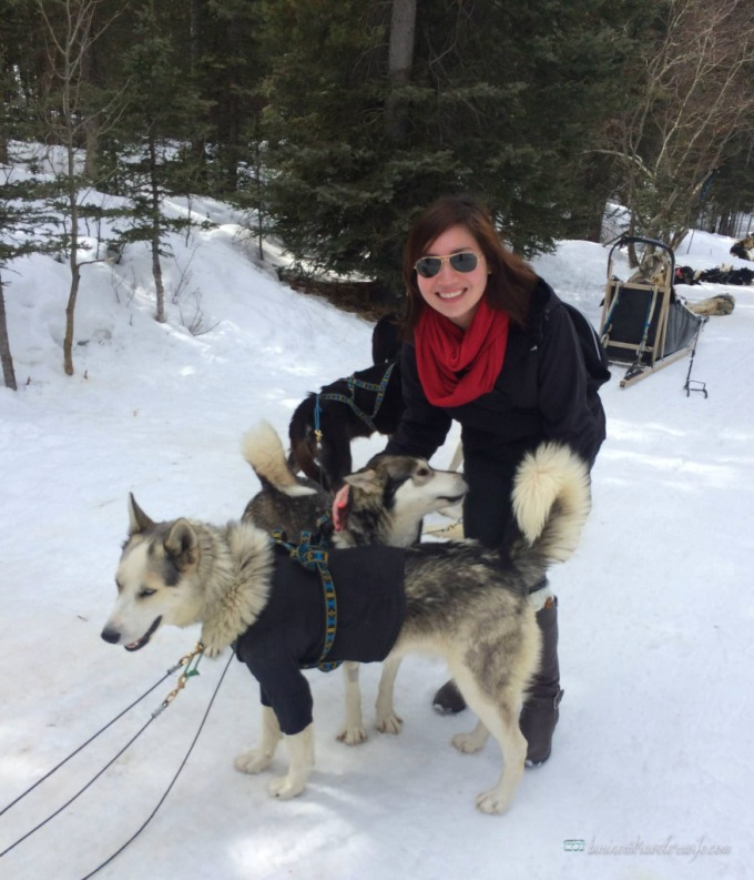 Dogsledding in Canmore, Alberta